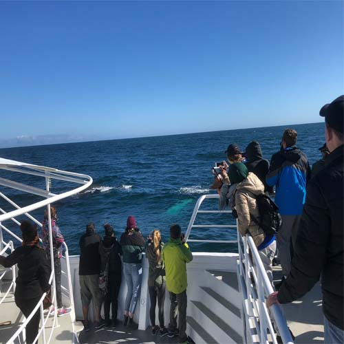 WHALE WATCHING TOURS Fremantle on the Spirit of Love