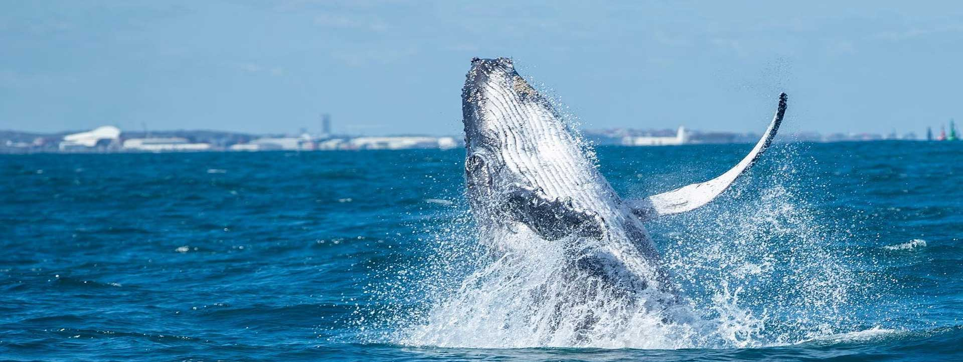 Whale-Watching-eco-adventure-tourisim